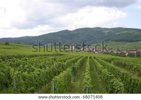 Vineyard at Hunawihr, Alsace, France, with the Saint James major church on the bottom - stock photo