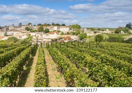 Vineyard at Saint-Emilion, France - stock photo
