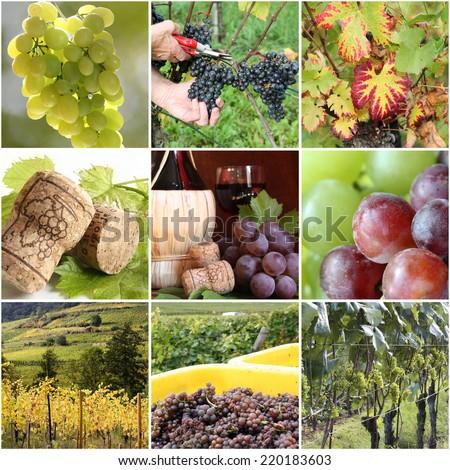 Vineyard collage - stock photo