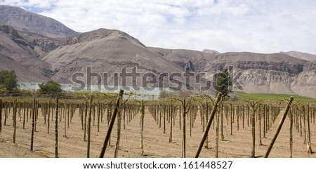 Vineyard cultivation for fruit and wine, in the inhospitable mountains of the Andes. Chile - stock photo