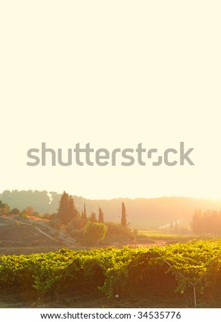 vineyard farm - stock photo