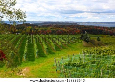 Vineyard field in Old Mission Peninsula Michigan in the Autumn - stock photo