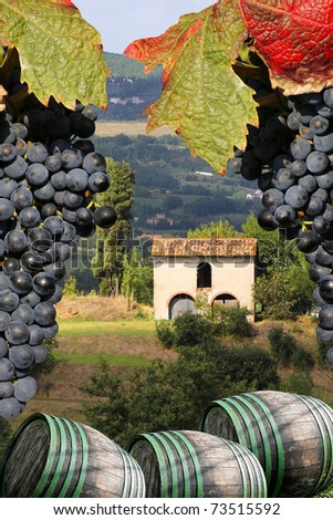 Vineyard in Chianti, Tuscany, Italy, famous landscape - stock photo