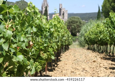Vineyard in France with old village in back - stock photo