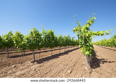 Vineyard in La Rioja, Spain. - stock photo