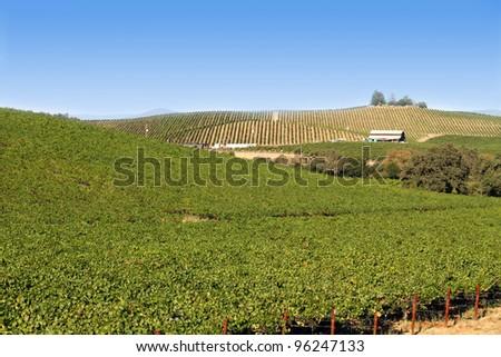 vineyard in Napa country, California - stock photo