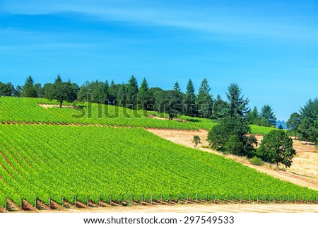 Vineyard in Oregon wine country with pine trees visible in the landscape near Dundee - stock photo