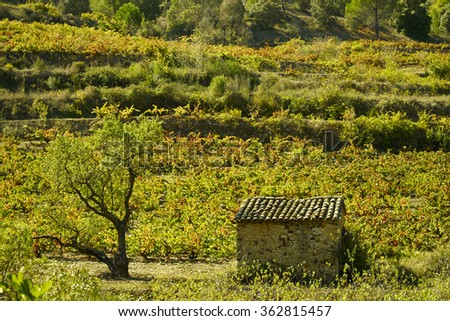 Vineyard in Priorat - stock photo