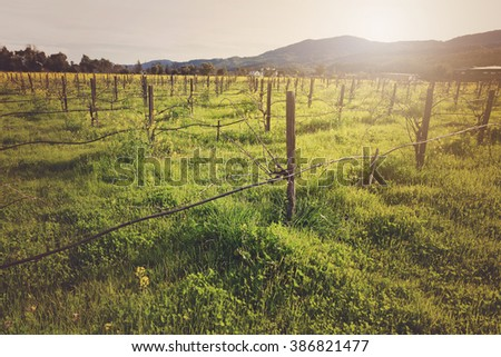 Vineyard in Spring with Vintage Instagram Film Style Filter - stock photo