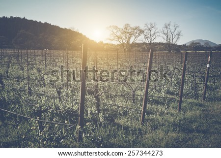Vineyard in Winter with Vintage Instagram Film Style Filter - stock photo