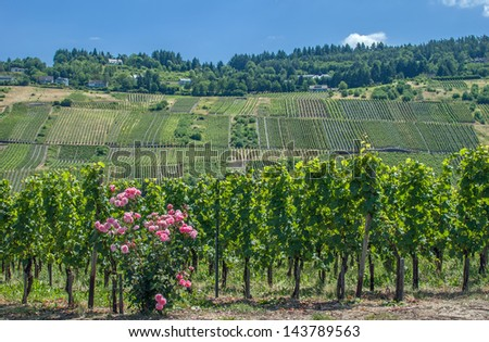 Vineyard landscape at Mosel River near Cochem,Germany - stock photo