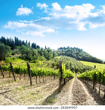 Vineyard landscape with a beautiful blue sky  and clouds in Italy in the area of Chianti  - stock photo