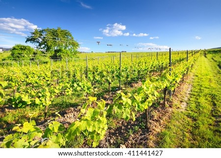Vineyard landscape with hills in Pfalz, Germany - stock photo