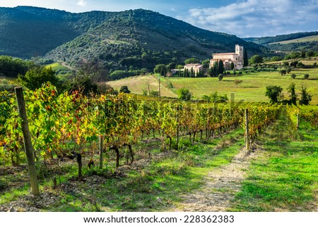 Vineyard on a background the monastery in Tuscany - stock photo
