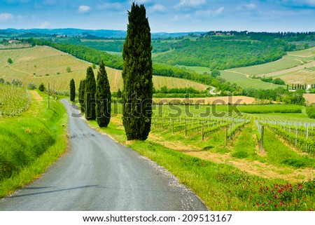 Vineyard on a hill beside a road lined by cypresses on a sunny day near Castelfiorentino, Tuscany, Italy - stock photo