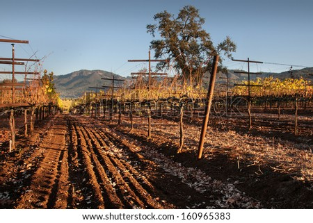 Vineyard Perspective - stock photo