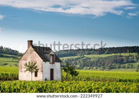 Vineyard. Pommard, Cote de Beaune, d'Or, Burgundy, France - stock photo