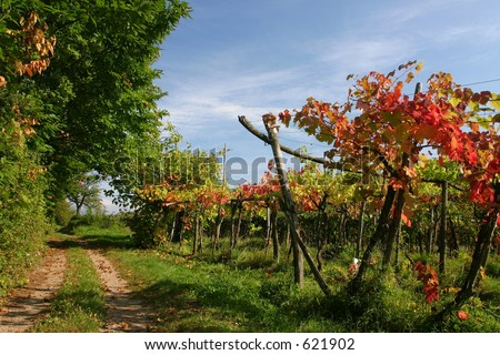 Vineyard route - stock photo