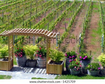 Vineyard & Trellis - stock photo