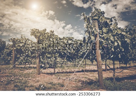 Vineyard with Blue Sky in Autumn with Vintage Film Style Filter, blur - stock photo