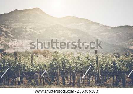 Vineyard with Blue Sky in Autumn with Vintage Film Style Filter, unfocused - stock photo