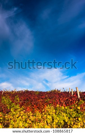 Vineyard with dramatic sky on a bright autumn day - stock photo