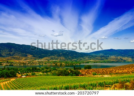 Vineyard with lake, sky and mountains in the background - stock photo