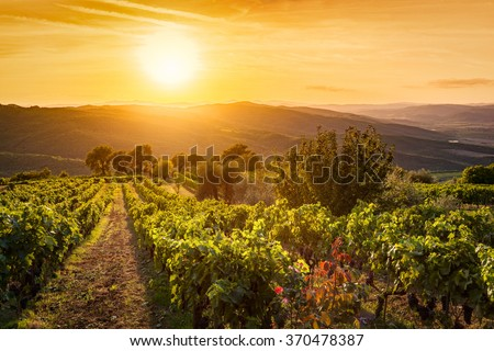 Vineyard wonderful landscape in Tuscany, Italy. Wine farm at sunset - stock photo