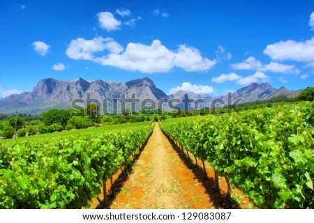 Vineyards against awesome mountains. Shot near Cape Town, Western Cape, South Africa - stock photo