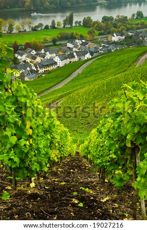 vineyards  along the mosel river in germany - stock photo
