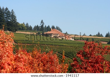 Vineyards and a winery viewed from behind richly colored maple trees in autumn - stock photo