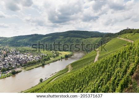 Vineyards in Germany along river Moselle near Punderich - stock photo