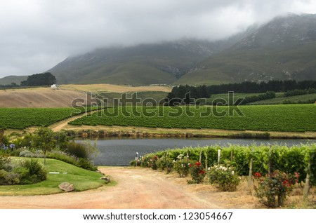 Vineyards in Hemel and Aarde Valley near Hermanus, South Africa - stock photo