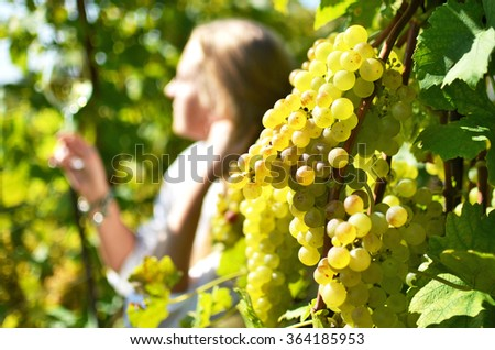 Vineyards in Lavaux, Switzerland - stock photo