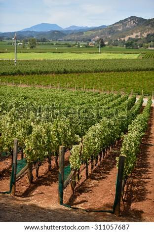 Vineyards in Northern California - stock photo