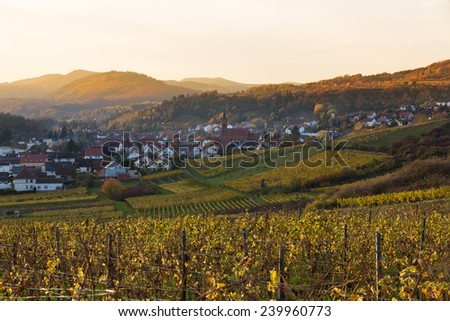 Vineyards in Pfalz at sunset, Germany - stock photo