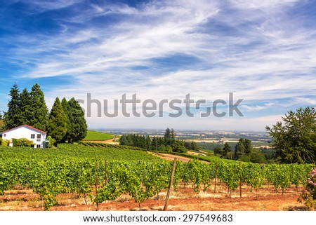 Vineyards in the Dundee Hills in Oregon with a beautiful dramatic sky - stock photo