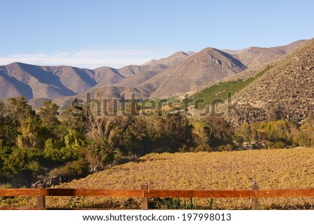 Vineyards in the Limari Valley in Central Chile - stock photo