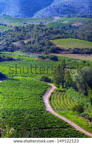Vineyards in the Saint Chinian region of France - stock photo