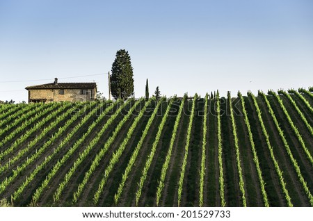 Vineyards in Tuscany. Farm house. - stock photo
