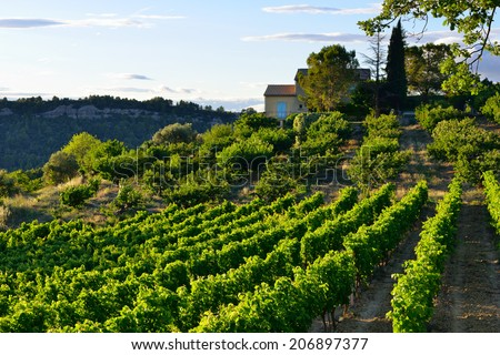 Vineyards in Vaucluse, Provence, France  - stock photo