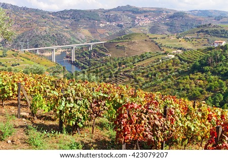 Vineyards of Douro valley at autumn (focus at foreground), Portugal. - stock photo