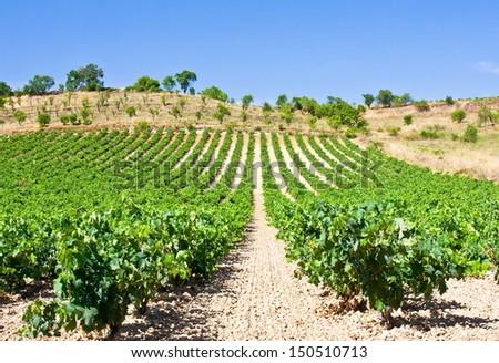 Vineyards of La Rioja - stock photo