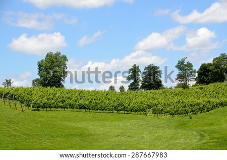 Vineyards of North Georgia wine country, USA. - stock photo