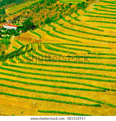 Vineyards on the Hills of Portugal - stock photo