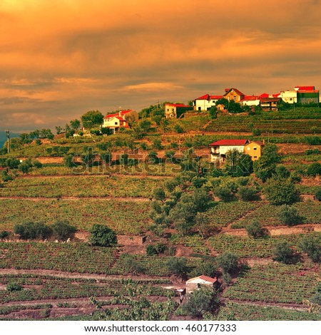 Vineyards on the Hills of Portugal at Sunset, Vintage Style Toned Picture - stock photo