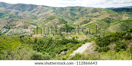 vineyars in Douro Valley, Portugal - stock photo