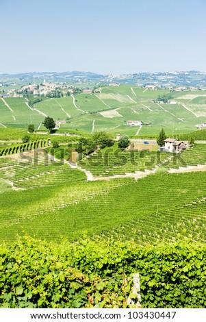 vineyars near Barolo, Piedmont, Italy - stock photo