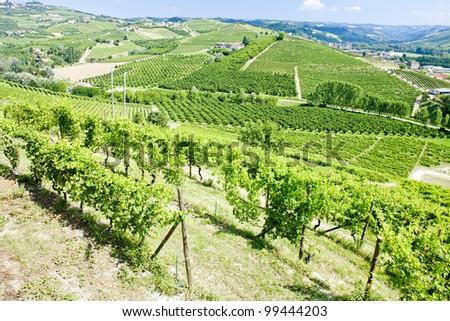vineyars near Grinzane Cavour, Piedmont, Italy - stock photo