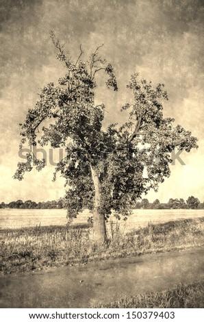 vintage apple tree - stock photo